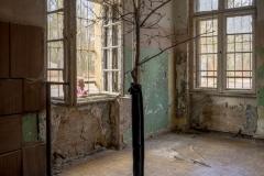 Im Raum wächst ein Baum.