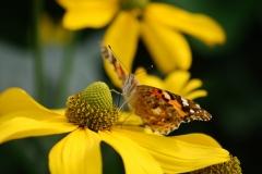 Blume-mit-Insekten-002_2