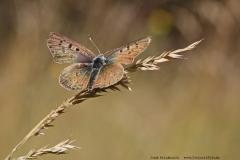 Schmetterlinge-08
