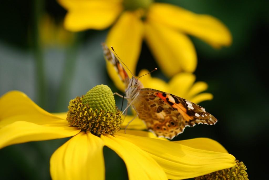 Blume mit Insekten 002_2