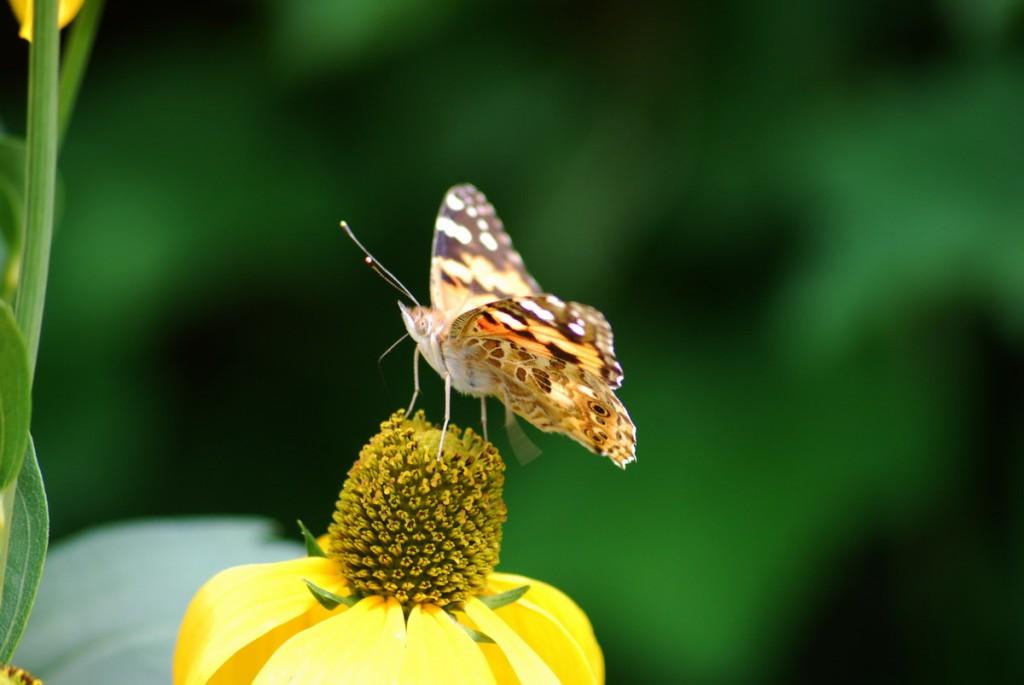 Blume mit Insekten 028