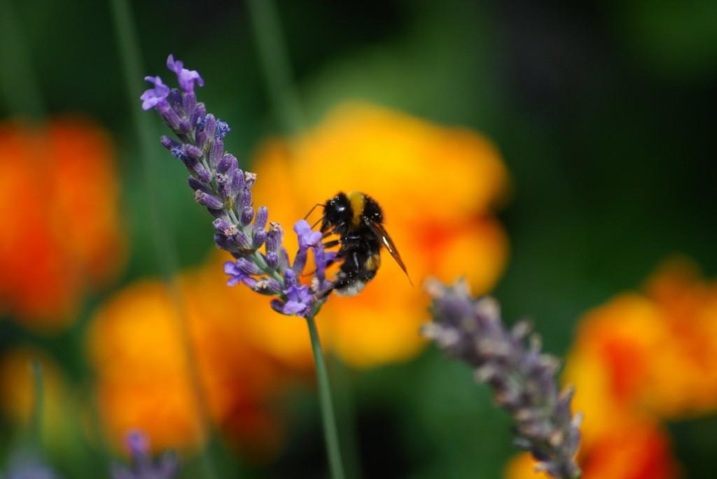 Blume mit Insekten 050