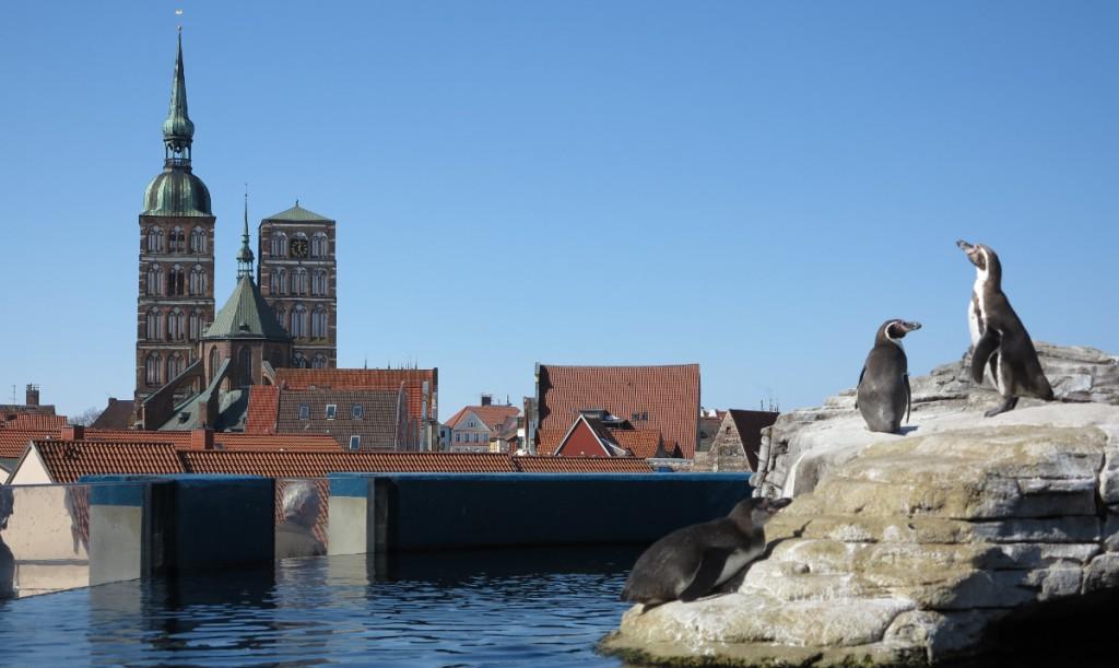 OZEANEUM Stralsund