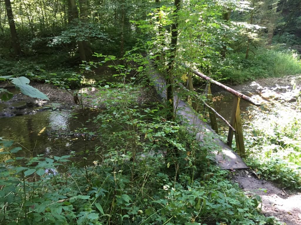 Ein Baumstamm ergibt eine Brücke in der Wutachschlucht.