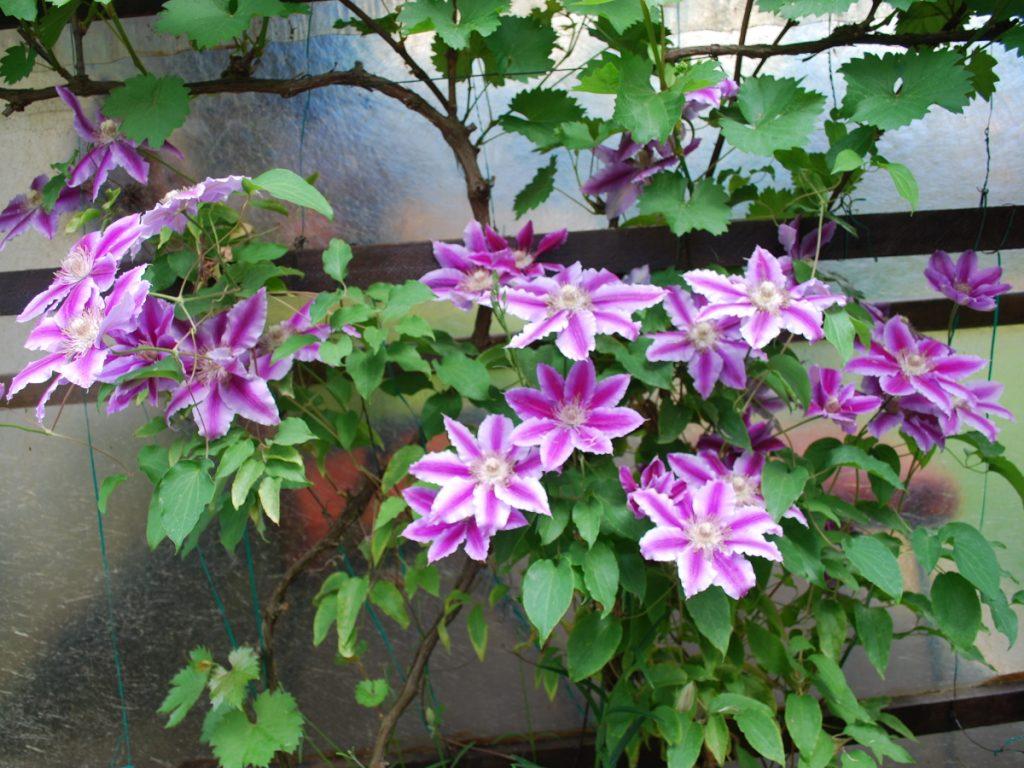 Garten_Tipp
