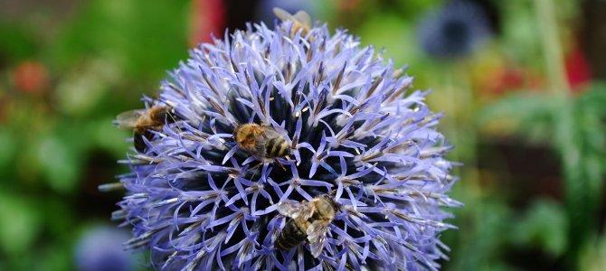 Beitrag_Bienen