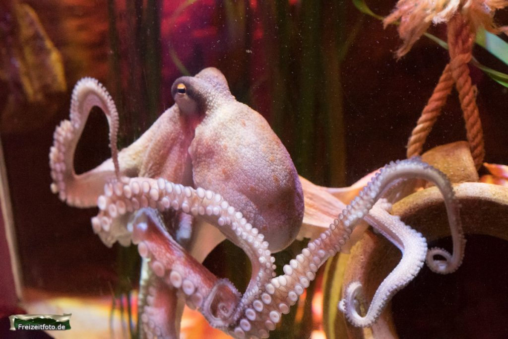 berlin-sealife-003