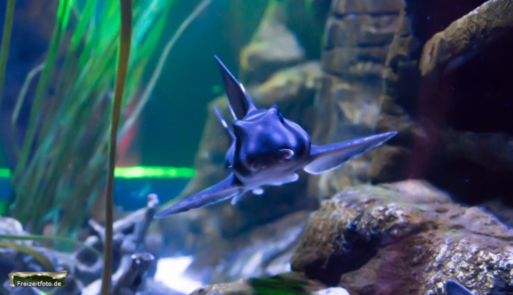 berlin-sealife-006