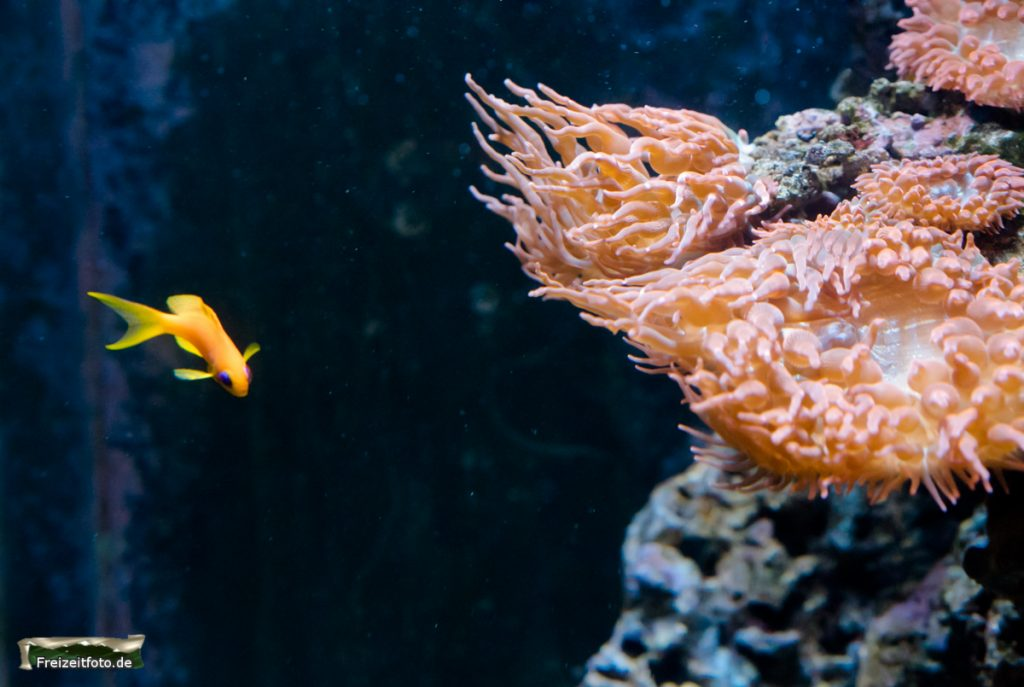 berlin-sealife-007