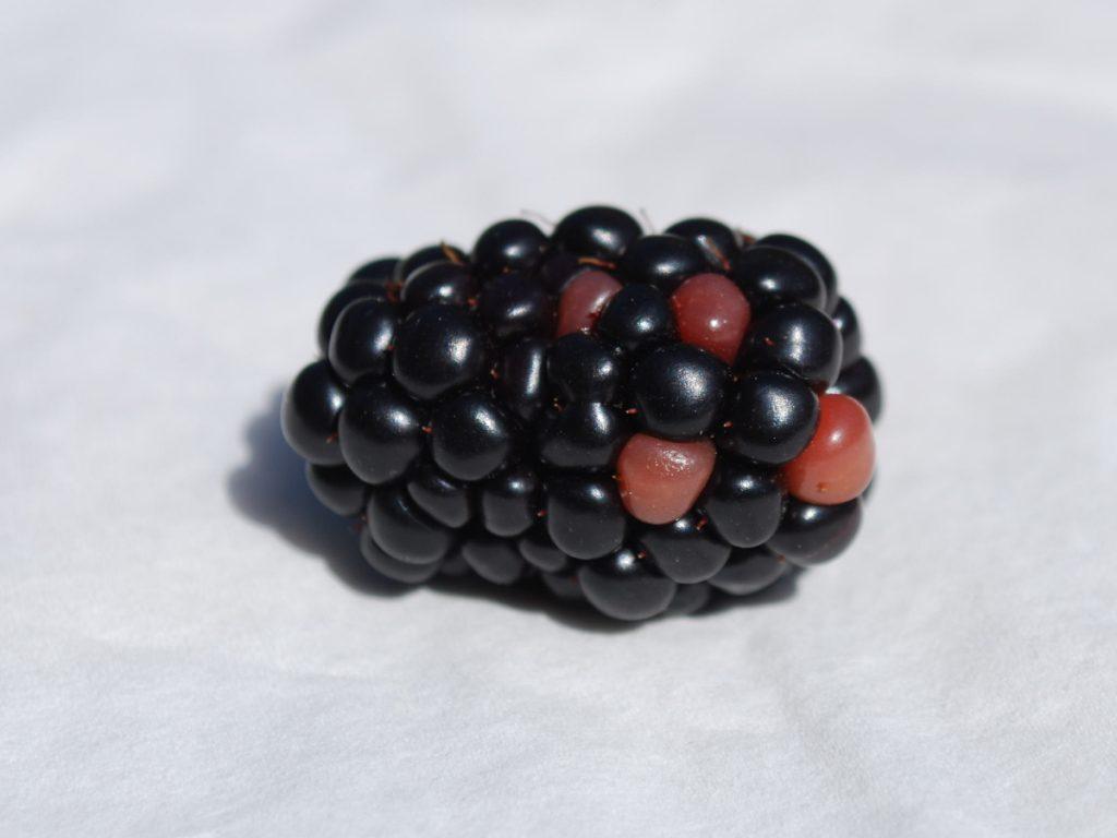 Brombeerfrucht
