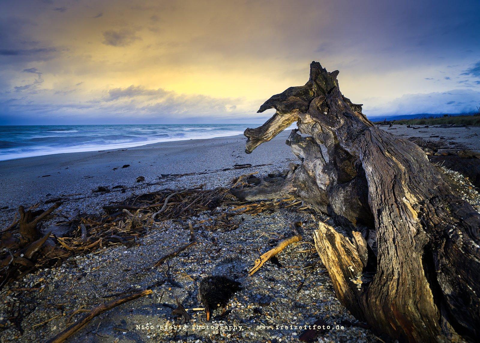 Creature Haast Beach