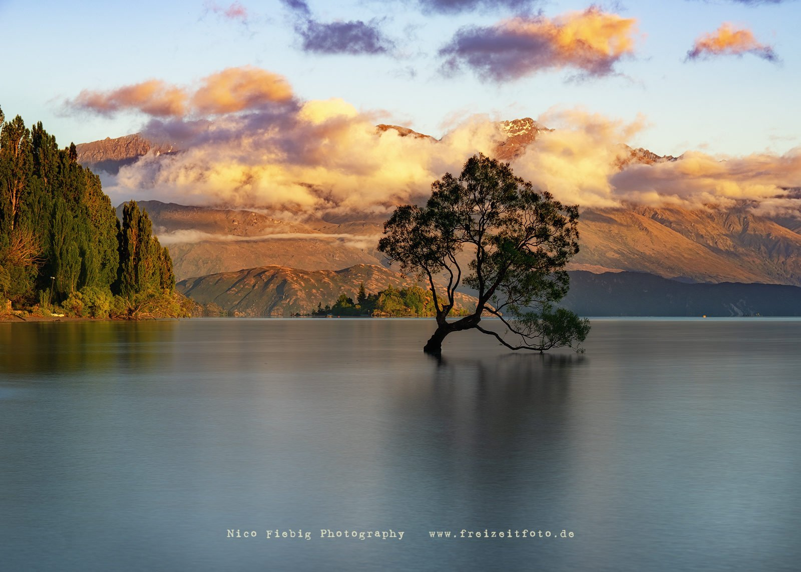 Neuseeland The Wanaka Tree