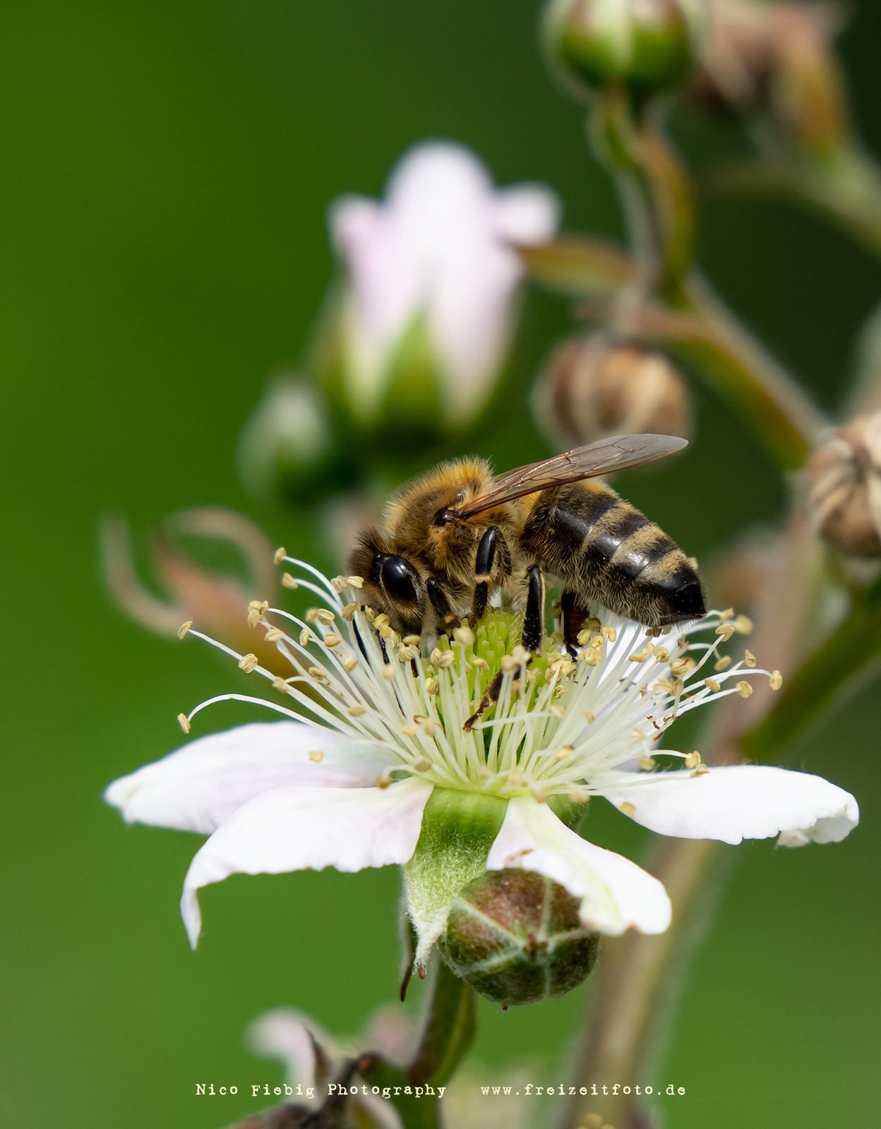 Makrofotografie Insekten