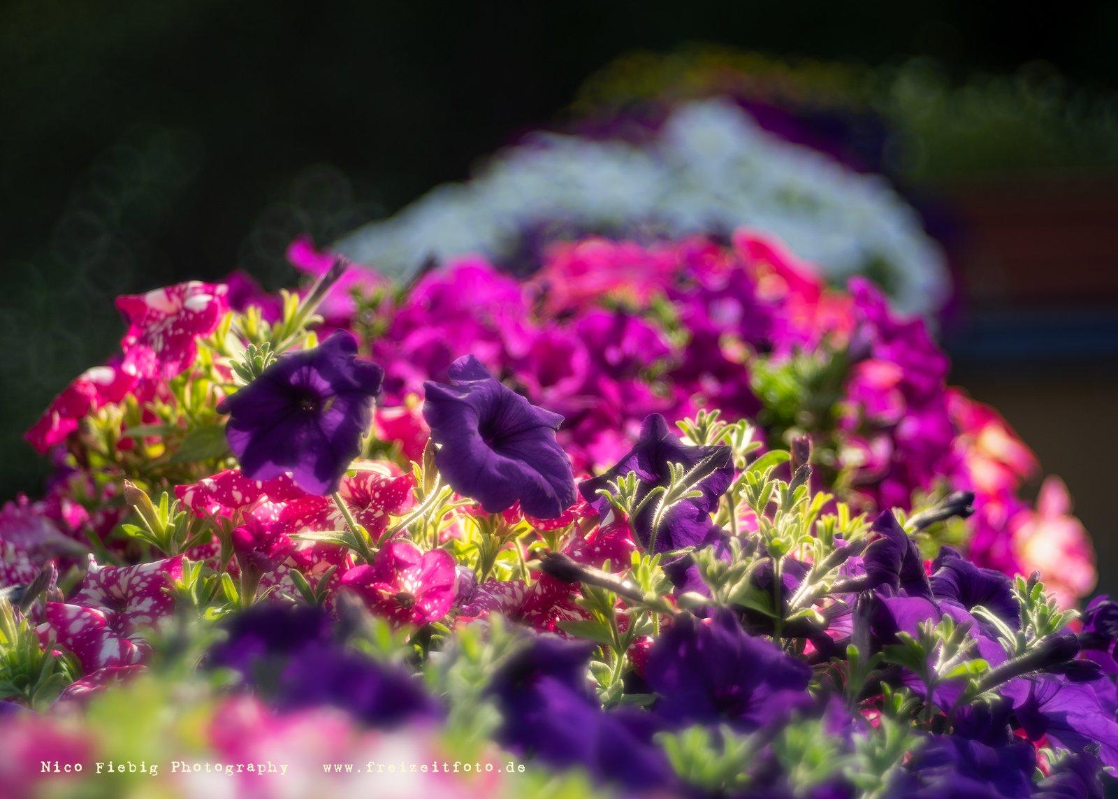 Trioplan II - Bilder - Blüten