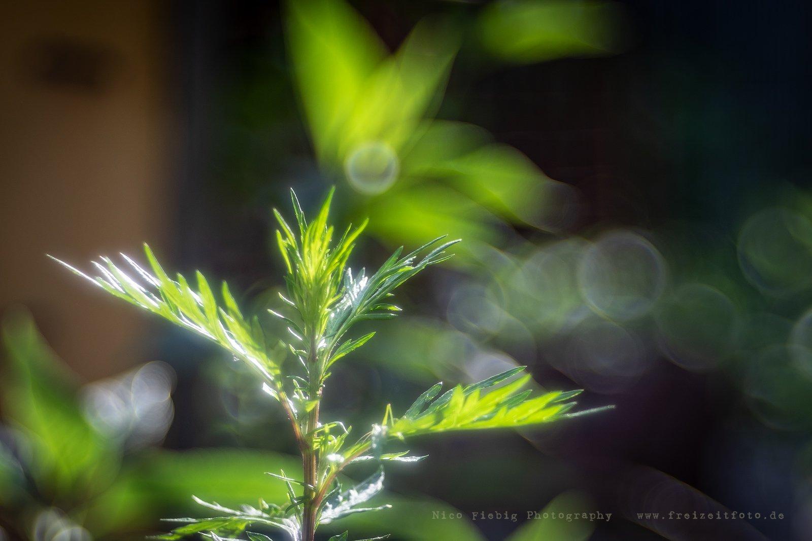 Trioplan II - Bilder - Pflanzen
