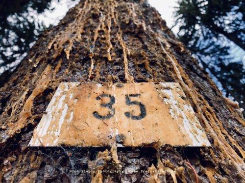 Baum mit Nummer