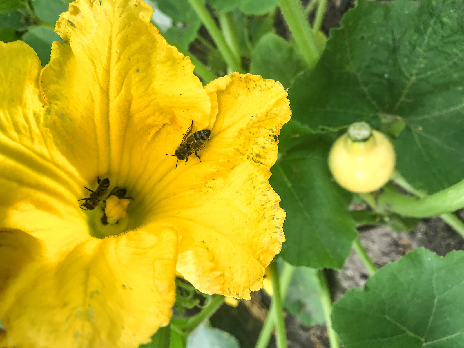 Blumen im Gemüsebeet