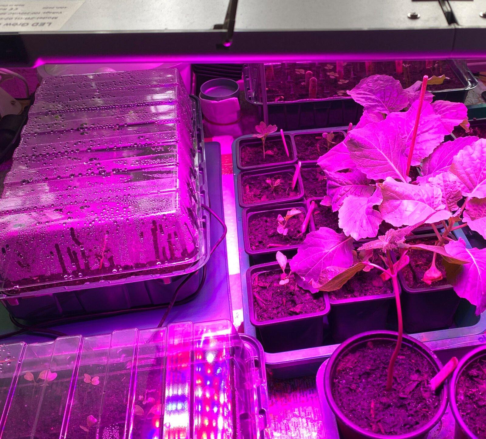 Gemüsepflanzen vorziehen