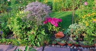 Keine Pestizide im Kleingarten