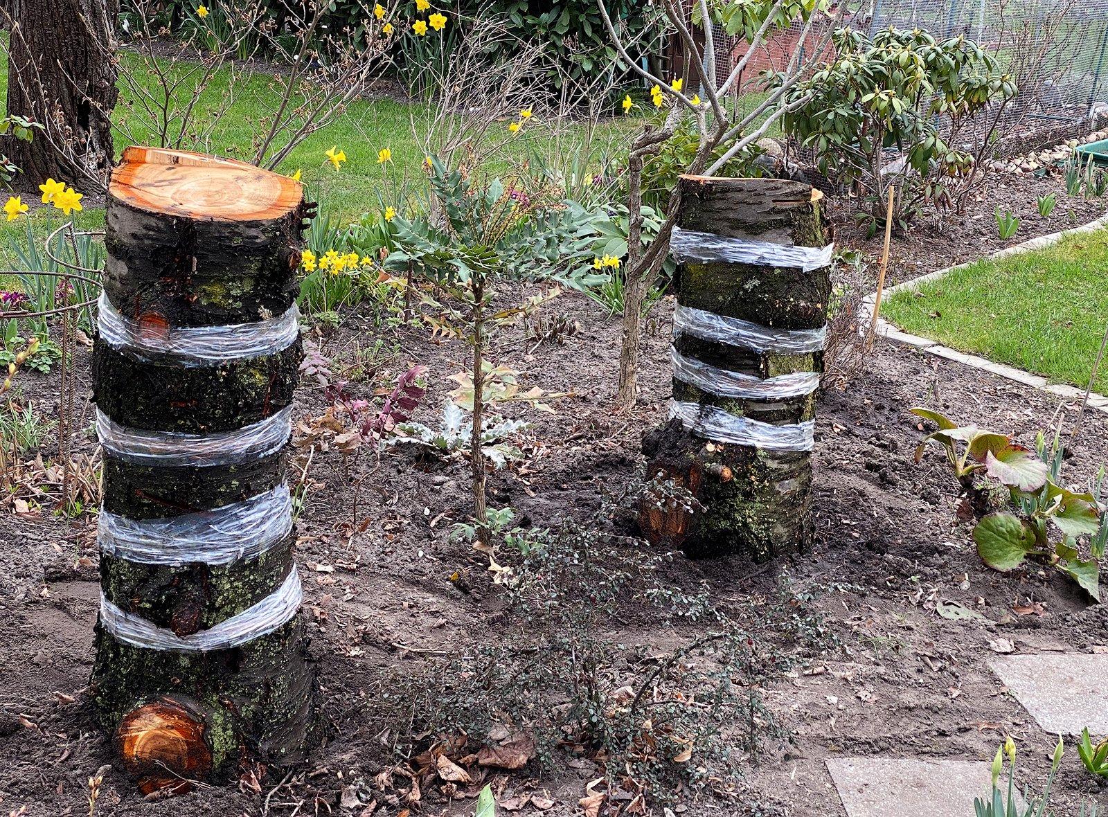 Eigene Pilze im Garten züchten